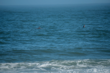 Dallas Tolson,Dolphins, Jetty, Buxton, Surfing, Surfer, Waves, Hatteras Island, Epic Shutter Photography, Outer Banks Family Photographers, Hatteras Island Family Photographers, Old Lighthouse Beach, North Carolina, OBX Photographers