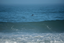 Dallas Tolson, Dolphins, Jetty, Buxton, Surfing, Surfer, Waves, Hatteras Island, Epic Shutter Photography, Outer Banks Family Photographers, Hatteras Island Family Photographers, Old Lighthouse Beach, North Carolina, OBX Photographers