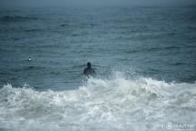 Dallas Tolson, Surfing, Buxton, Cape Hatteras National Seashore, Surfers,Hatteras Island Wildlife Rescue, Razorbill Bird, Epic Shutter Photography, Outer Banks Photographers, Hatteras Island Photographers, Documentary Photographers