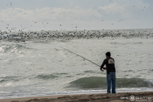 Cormorants Fishing, Cape Point, Fisherman, Cape Hatteras National Seashore, Buxton, Hatteras Island, North Carolina, Epic Shutter Photography, Outer Banks Photographers, Documentary Photographer, Hatteras Island Photographers