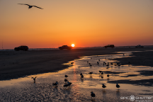 Sunset, Cape Point, Buxton, Fisherman, Fishing, Cape Hatteras National Seashore, Epic Shutter Photography, Outer Banks Photographers, Hatteras Island Documentary Photographers