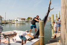 Hatteras Harbor Marina, Offshore Charter Fishing, Blue Marlin, Marlin Fishing, Bite Me Sportsfishing Charters, Outer Banks Documentary Photographers, Captain Jay Kavanagh, Garrett Palmatier, Hatteras Island Photographers, Fishing, Fisherman, Anglers, Hatteras Island Fishing