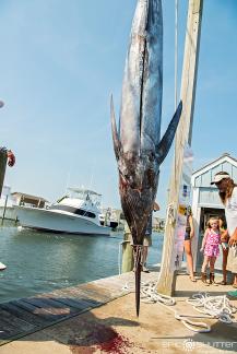 Hatteras Harbor Marina, Offshore Charter Fishing, Blue Marlin, Marlin Fishing, Bite Me Sportsfishing Charters, Outer Banks Documentary Photographers, Captain Jay Kavanagh, Garrett Palmatier, Hatteras Island Photographers, Fishing, Fisherman, Anglers, Hatteras Island Fishing