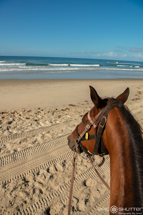 Outer Banks Equine Adventures, Horseback Riding through the